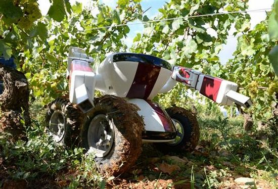 Wall-Ye Robot Your Grape Vine Trimmer - 01
